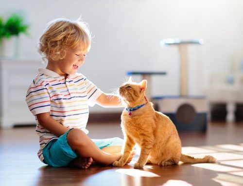 Keeping a clean home with pets: our home cleaners in Melbourne explain how!